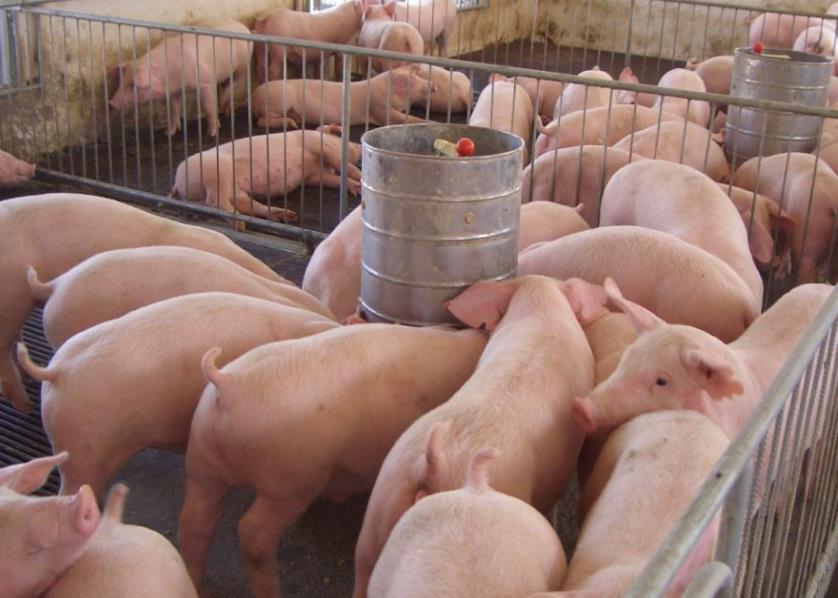猪粪加工有机肥最小成本多少?